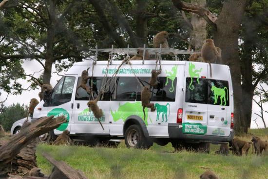 Knowsley Safari Park
